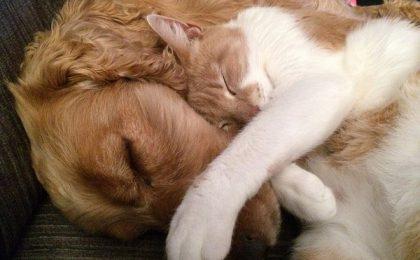 Ubezpieczenie zwierząt domowych oferta Link4