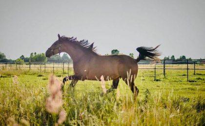 Ubezpieczenie konia w Concordia Gorzów